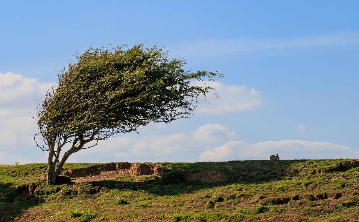 سرعت وزش باد در دورود لرستان به ۱۰۴ کیلومتر بر ساعت رسید