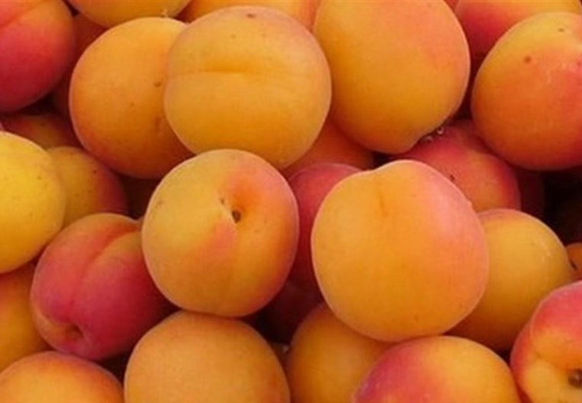 زردآلو کیلویی 55 هزار تومان؟!   وضعیت زردآلو و میوه های نوبرانه در بازار میوه