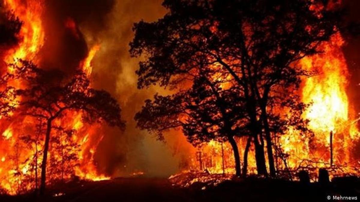 آتش دیگر در جنگلهای گچساران  زبانه کشیده  |  سال سیاه زاگرس تمامی ندارد