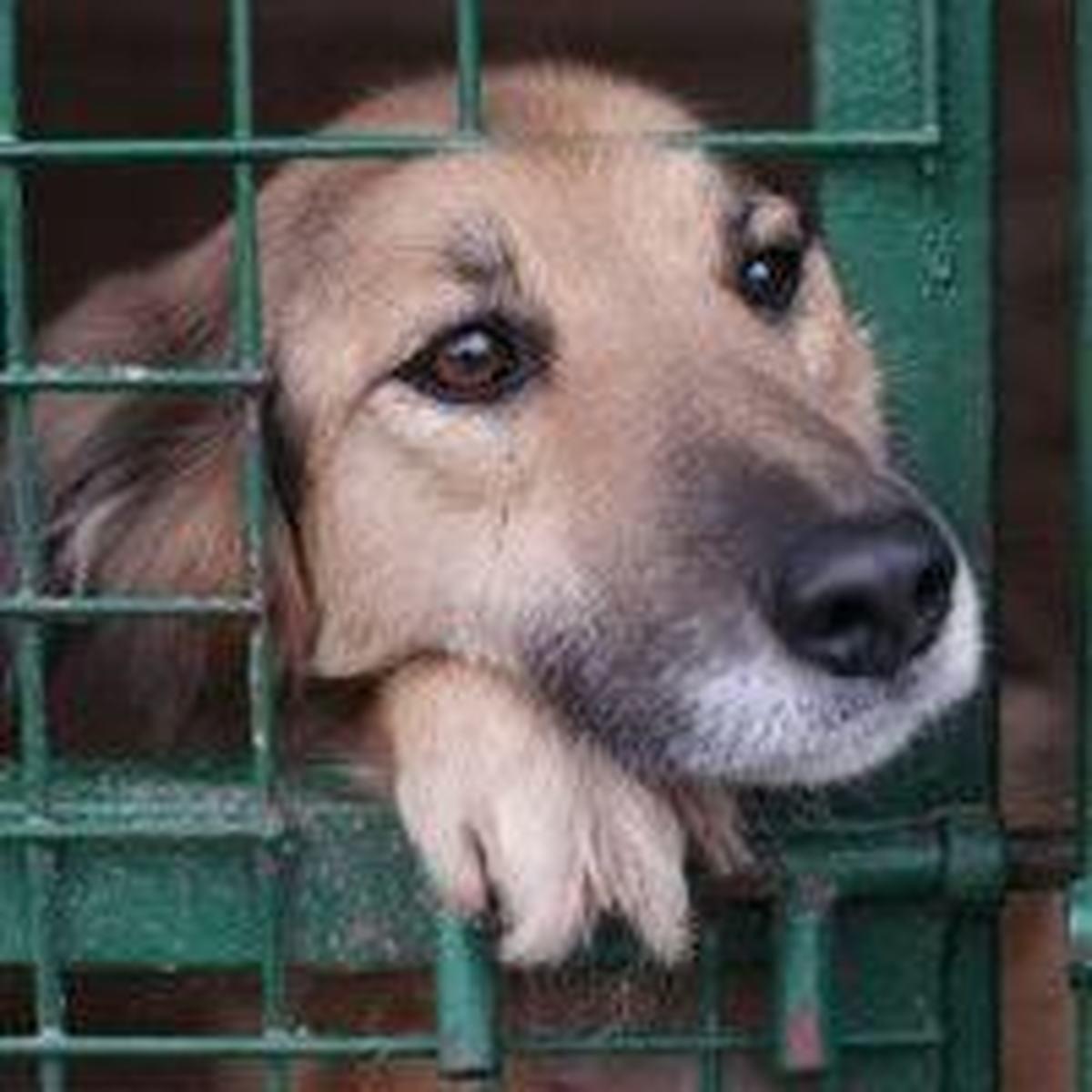 بازداشت جوان حیوان آزار در بوشهر