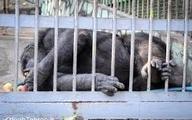 چرا باغ وحشها به کشتارگاه حیات وحش ایران تبدیل شدهاند؟