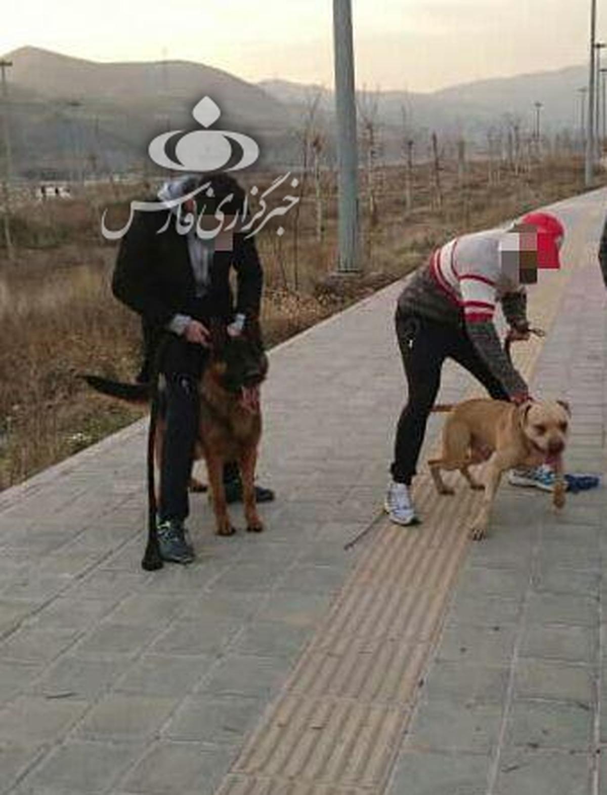 عکس وحشتناک حمله دو سگ به دختر ۱۰ ساله