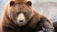 خرس گرسنه اجساد یک قبرستان را خورد