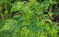 دانه ای گیاهی و ارزان که میتواند برای تصفیه آب در سطح گسترده استفاده شود