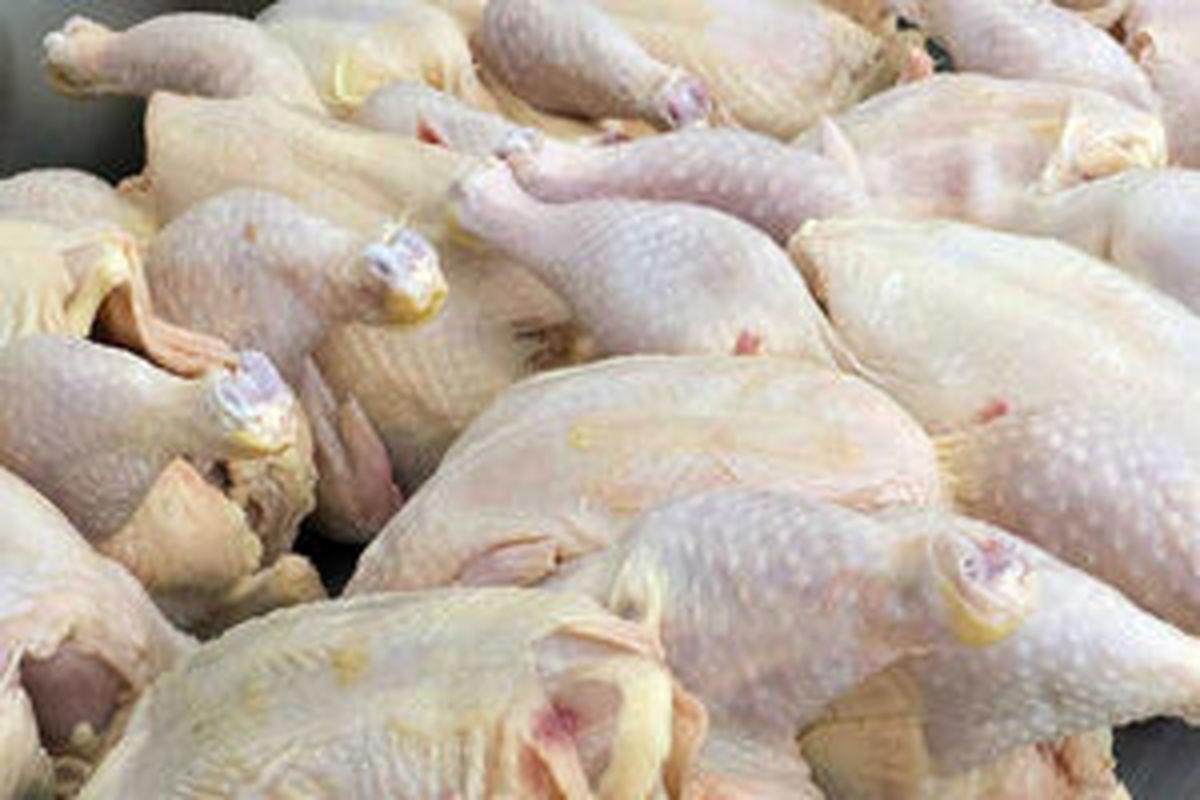 گوشت مرغ   آغاز  توزیع گوشت مرغ  در سراسر کشور