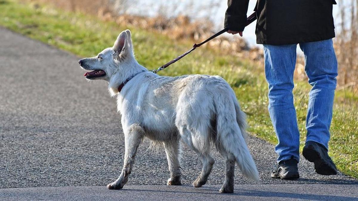 ماجرای برخورد پلیس با سگ گردانی چه بود