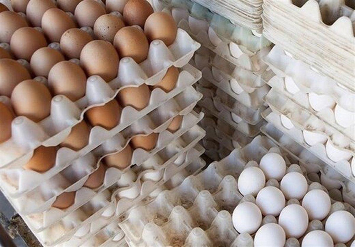 تفاوت قیمت تخم مرغ از درب مرغداری تا بازار چقدر است؟
