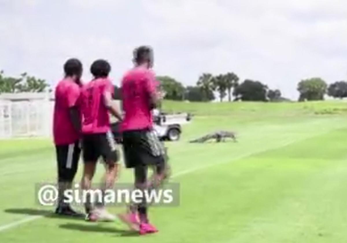ورود تمساح به زمین تمرین ورزشکاران در تورنتوی کانادا + ویدئو