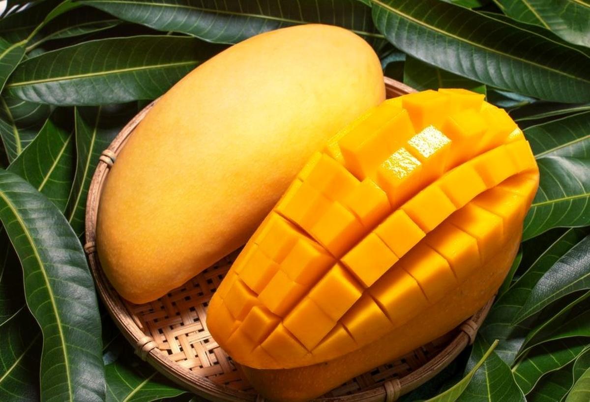 خواص میوه خوشمزه و لذیذ | درمان دیابت و کاهش کلسترول با انبه