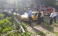 مصدوم شدن یک زن بر اثر سقوط درخت در گنبدکاووس