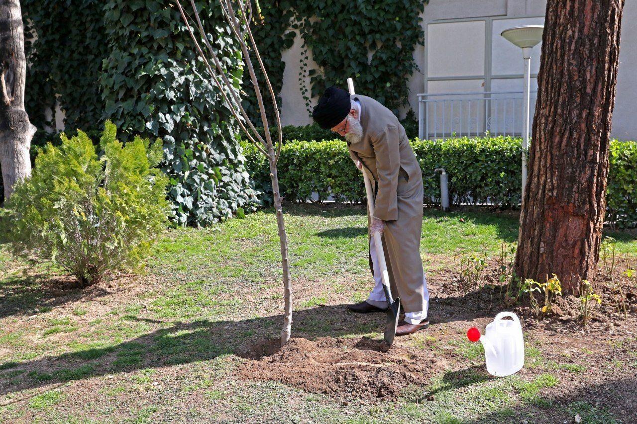 کاشت نهال توسط رهبر انقلاب همزمان با روز درختکاری
