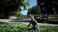 کوبا | کوبا خطاب به شهروندان: غذای خود را تولید کنید