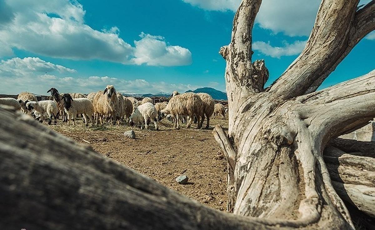 هشدار هواشناسی به کشاورزان و دامداران: خشکسالی در اکثر نقاط کشور حاکم است