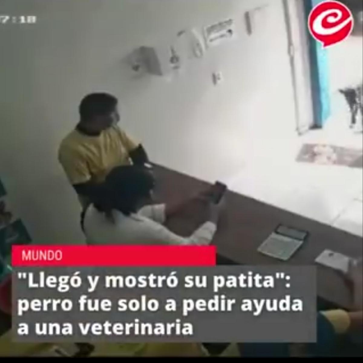 وقتی سگ زخمی برای درمان خودش را به کلینیک می رساند + ویدئو