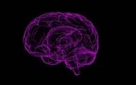 چرا اندازه مغز انسان کوچک شده است ؟