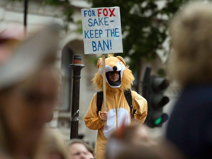 ممنوعیت شکار روباه در بریتانیا