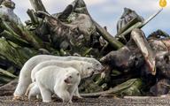 برترینهای مسابقه عکاسی جهان طبیعت در سال ۲۰۱۹